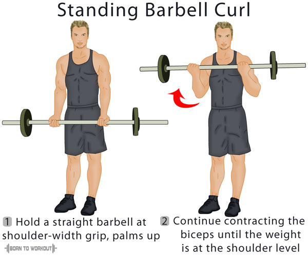 Standing Barbell Curl