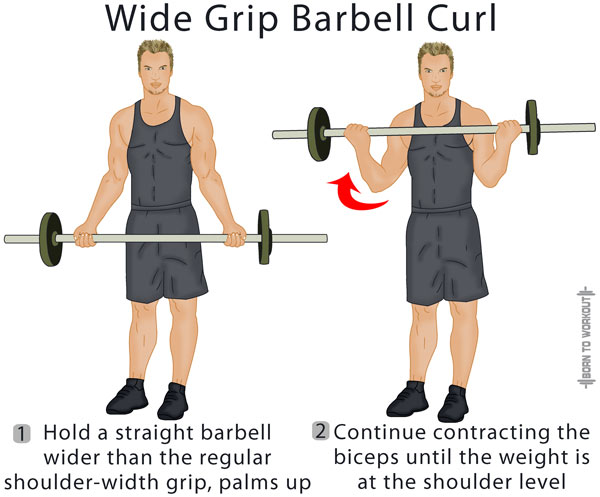 Standing Barbell Curl: Forms, Techniques, Tips, and Pictures