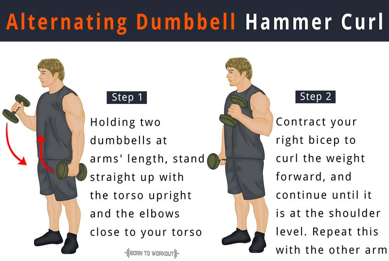 Alternating Dumbbell Hammer Curl