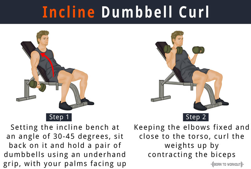 Incline Dumbbell Curl How To Do Benefits Forms Video
