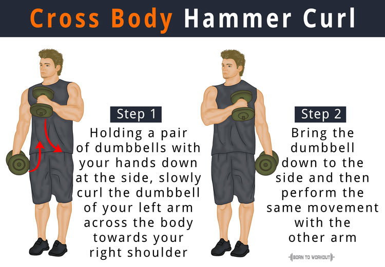 Cross Body Hammer Curl: How to do, Benefits, Muscles Worked
