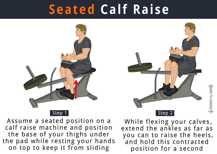 Seated Calf Raise What Is It How To Do Alternatives