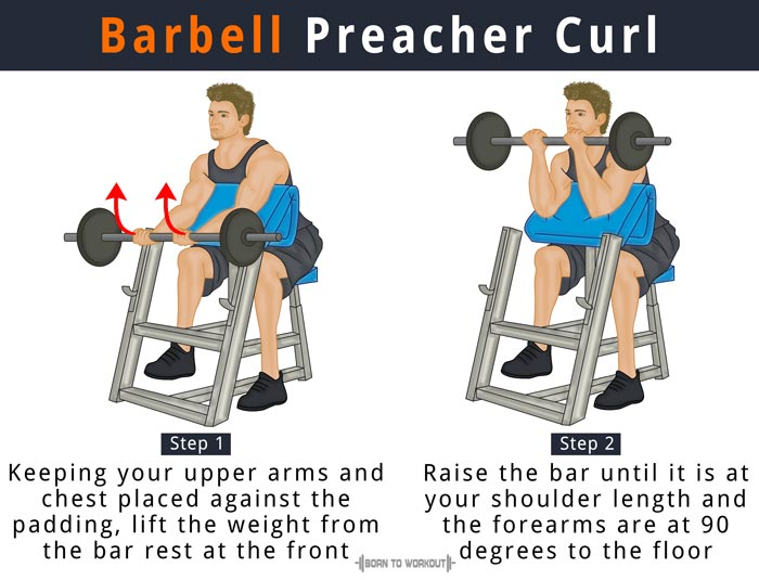 Barbell Preacher Curl: What is it, How to do, Muscles ...  Preacher